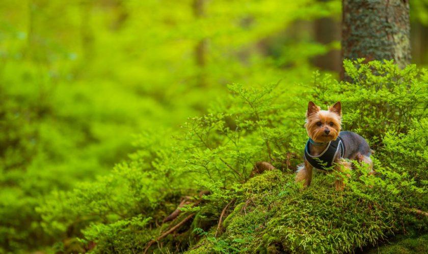 Image du chien qui joue à cache cache