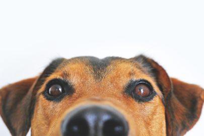 Déconfinement : préparer son chien