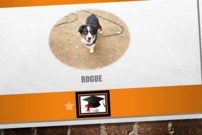 Rogue – Berger Australien